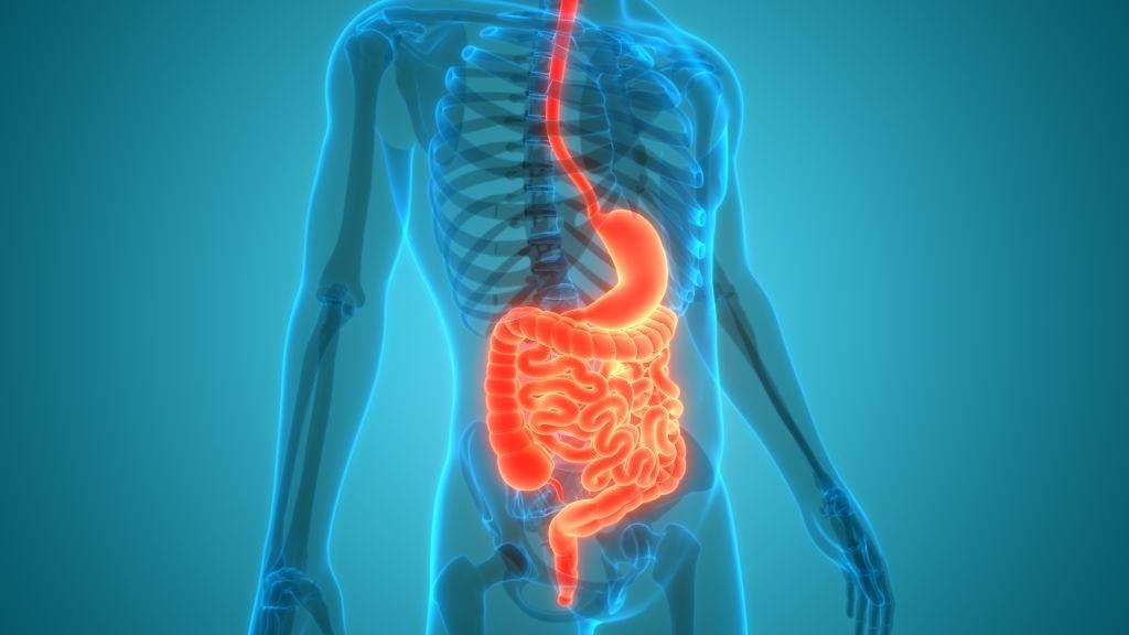 Imagem Cirurgia do Aparelho Digestivo